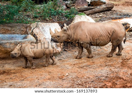 Black rhino mother and her calf - stock photo
