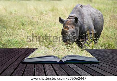 Black rhinoceros in captivity conceptual book image - stock photo
