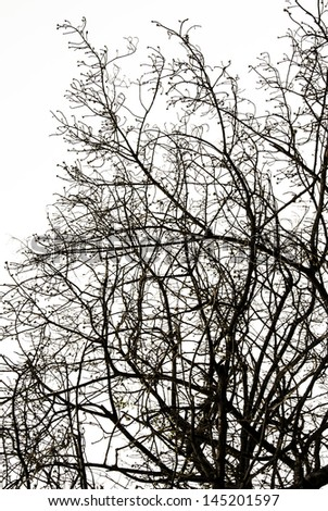 Black silhouette branches of tree on white isolated - stock photo