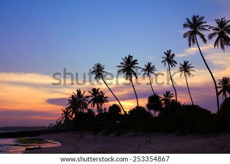 Black silhouettes of palm trees against the sky painted in sunset colors - stock photo