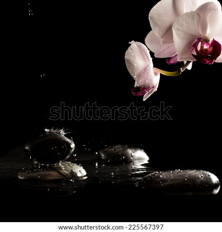 Black Spa or Massage Stones on Water with Beautiful Fresh Flower, Isolated on Black Background. - stock photo