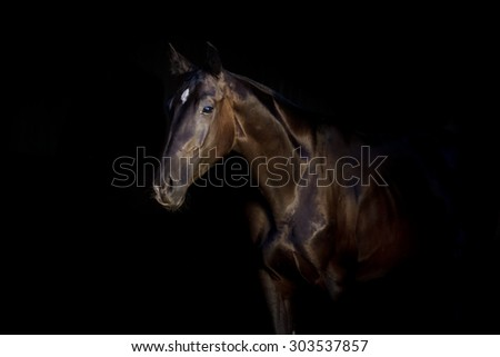 Black stallion portrait isolated on black background - stock photo