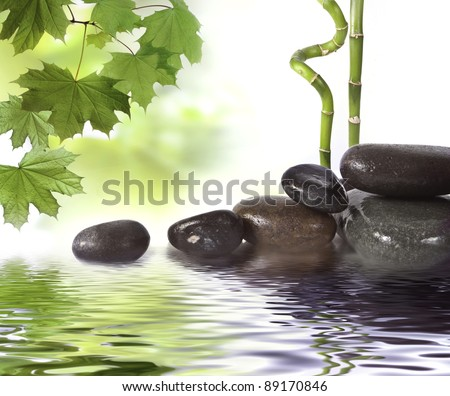 Black stones and green plant with drops - stock photo