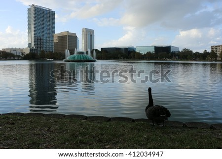 Black swan floating on the river/Black swan and river/Please visit my portfolio for more photos like this! - stock photo