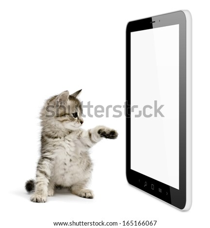 Black tablet pc on white background and kitten pushing screen. Portable computer - stock photo