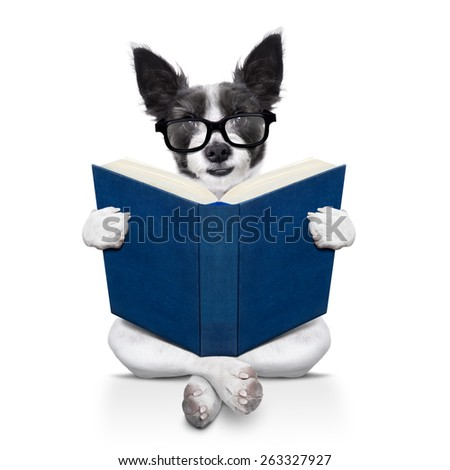 black terrier dog sitting reading a big book, isolated on white background - stock photo