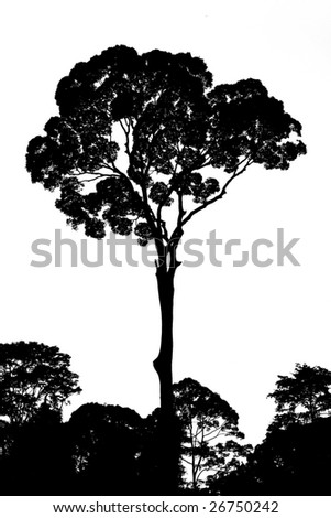 Black tree isolated on white - stock photo