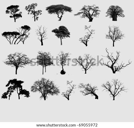 Black tree selection - stock photo