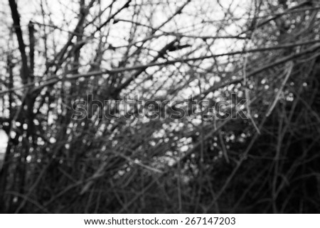 Black&White,Blur,Bamboo forest. Jungle background in Thailand - stock photo