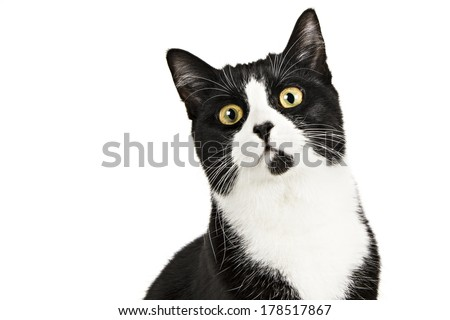 Black & White Cat on White - stock photo