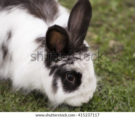 Black-white rabbits head close up view - stock photo