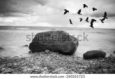 Black & White rocky seascape scene with seagull on stone - stock photo