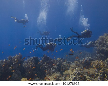 black white spotted puffer fish - stock photo