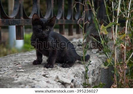 Black wild kitten illness one-eyed - stock photo