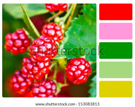 blackberries color palette with complimentary swatches. - stock photo
