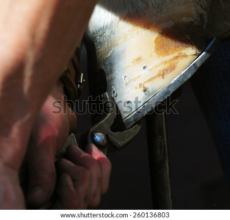 Blacksmith pressing down the horshoe to the hoof - stock photo