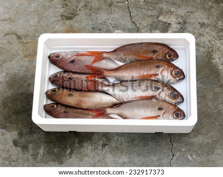 Blackspot Seabream in white box - stock photo
