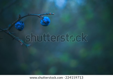 blackthorn branch in forest - stock photo