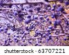 blackthorn bush with a lot of berries (focus in the middle of the bush) - stock photo