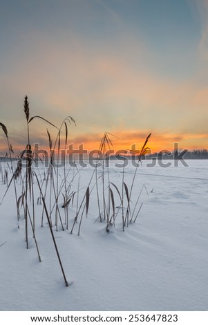 Blades on the frozen lake in the winter on a sunset - stock photo