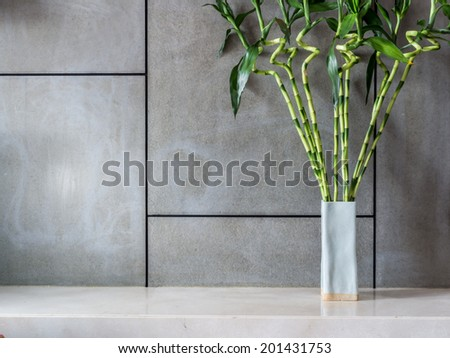 Blank modern room decorated with vase of Lucky bamboo (Belgian evergreen) - stock photo