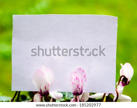 Blank note decorated with cyclamen flowers. Thank you or greeting card idea. - stock photo