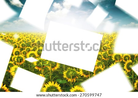 Blank Papers Floating in the Wind in Cultivated Agricultural Sunflower Field, Beautiful Clouds in Background - stock photo