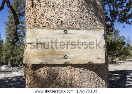 Blank rustic wood sign on pine tree. - stock photo