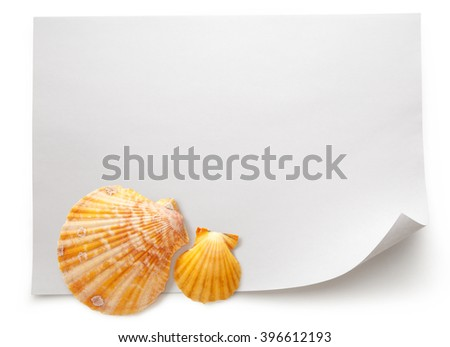Blank sheet of paper with seashells on white background - stock photo