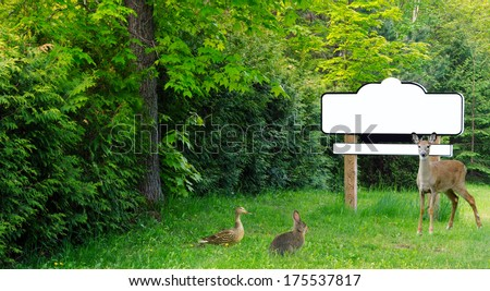 Blank sign with wooden posts surrounded by trees, with a young deer, a duck, and a rabbit gathered together. - stock photo