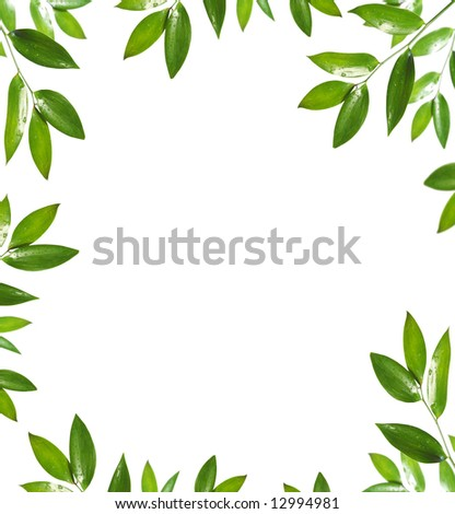 blank with green leaf - stock photo