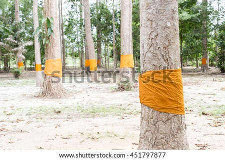 Blanket tree in Temple, The religious beliefs in Thailand. - stock photo