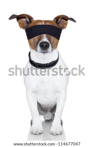 blindfold dog covering both  eyes - stock photo