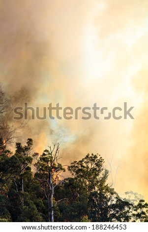 Blinding smoke from a forest fire - stock photo
