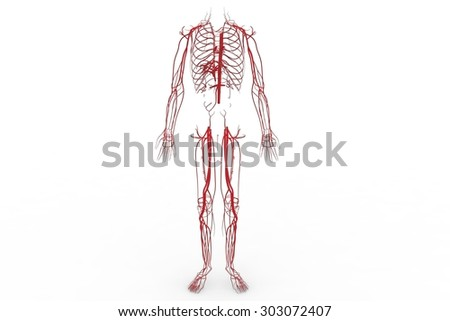 Blood system, Circulatory system, cardiovascular system, lymphatic system,  vascular system, blood vessels, lymph nodes, and lymph vessels  - stock photo