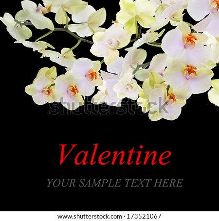 Bloom Flowers Orchid.Valentine card Border design with space for your text.Valentine's Day  - stock photo