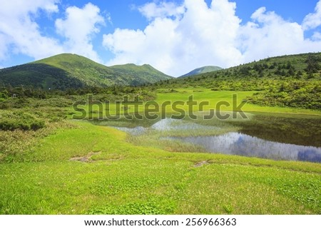 Bloom of Geum pentapetalum, Tamoyachi marsh and Mt. Hakkodasan, Aomori, Japan - stock photo