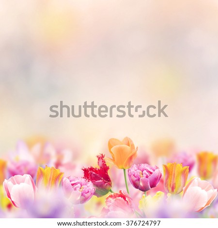 Bloom of Spring Flowers for Background - stock photo