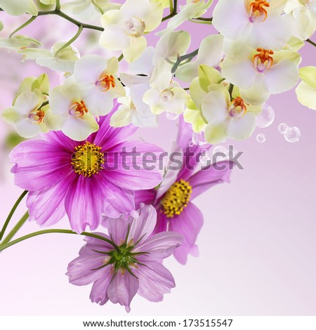 Bloom Spring beautiful Japanese Exotic Flowers.Flora Card - stock photo