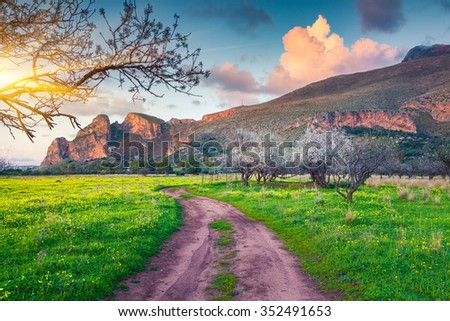 Blooming almond garden on the cape San Vito, soft mediterranean climate in Sicily, Italy, Europe.  - stock photo