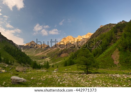 Blooming alpine meadow and lush green woodland set amid high altitude mountain range at sunsets. Valle d'Aosta, Italian Alps. - stock photo