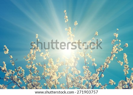 Blooming apple-tree branch in the blue sky - stock photo