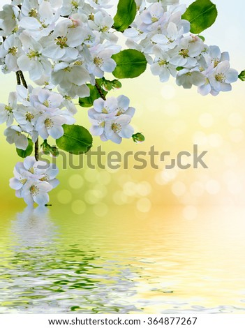 blooming apple tree. Spring landscape. Spring garden with flowering tree - stock photo