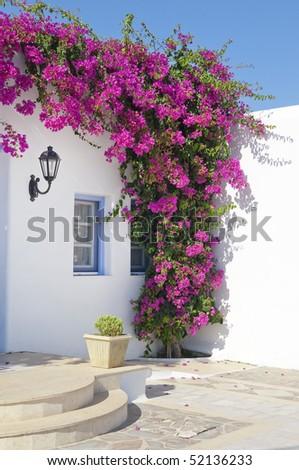 Blooming bougainvillea, framing the window in Mykonos, Greece. flowers around the window in the hotel on the island of Mykonos in Greece ... - stock photo