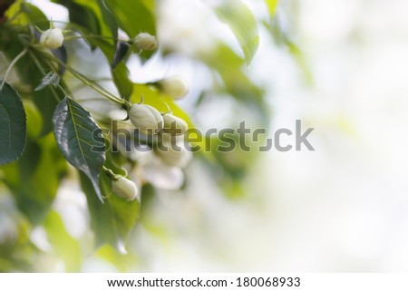 Blooming branch of fruit tree, shallow focus - stock photo
