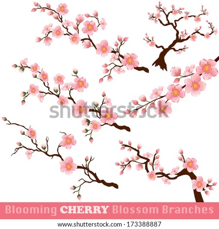 Blooming Cherry Blossom Branches Isolated on White. - stock photo