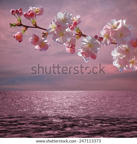 blooming cherry tree and sunset ocean, springtime background - stock photo