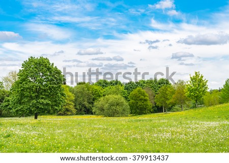 Blooming dandelion on green meadow in springtime  White and yellow Taraxacum officinale flowers in grass on a sunny day in spring against trees and blue sky - stock photo