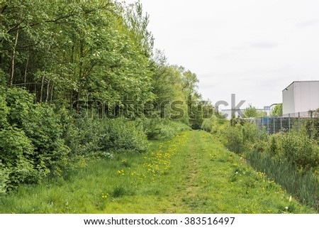 Blooming dandelion on green walking footpath in springtime  White and yellow Taraxacum officinale flowers in grass on a day in spring against trees and cloudy sky, image for nature blog - stock photo