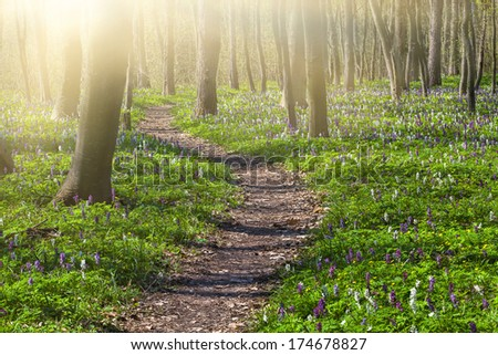 Blooming fields of flowers in spring forest - stock photo